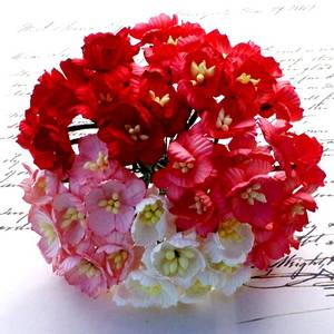 Bilde av Flowers - Cherry Blossom - Saa-243 - Mixed Red / White - 50stk