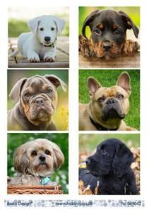 Bilde av Barto Design - Klippeark A4 - 069042 - Puppies