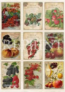 Bilde av Reprint -  A4 Klippeark - KP0065 - Fruits